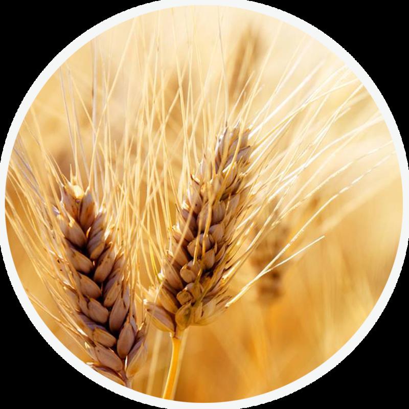 content_wheat_circle